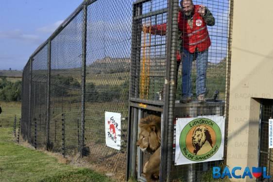 VIER PFOTEN Onesti - Africa de Sud
